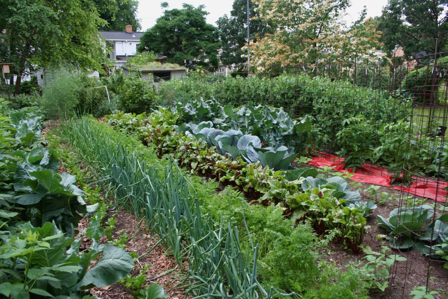 Making Your Garden the Star in Reducing Your Food Bills